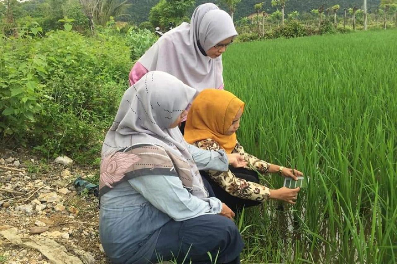 Foto: Mahasiswa Agroteknologi Mengecek Tingkat Kehijauan Daun Padi